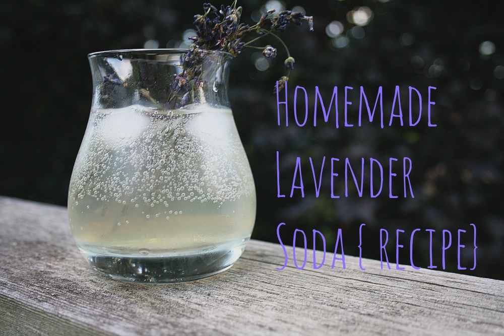 lavendercover