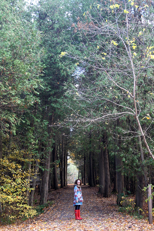 forest-walk-1